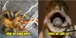 Những bí ẩn đáng sợ tồn tại trong thế giới sinh vật khiến con người kinh ngạc