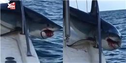 Sự việc hy hữu: Cá mập lao lên tàu cắn phá điên cuồng với cái miệng tung toé máu
