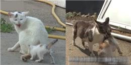 Thế sự đảo điên, mèo mẹ bỏ rơi con ruột còn mẹ mìn thì giành chăm sóc