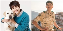 yan.vn - tin sao, ngôi sao - Song Joong Ki, từ một diễn viên tay ngang đến ngôi sao hàng đầu châu Á