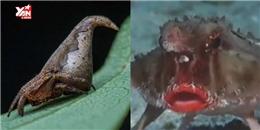 Những sinh vật huyền bí có thật trên Trái Đất và bí ẩn nơi tìm ra chúng
