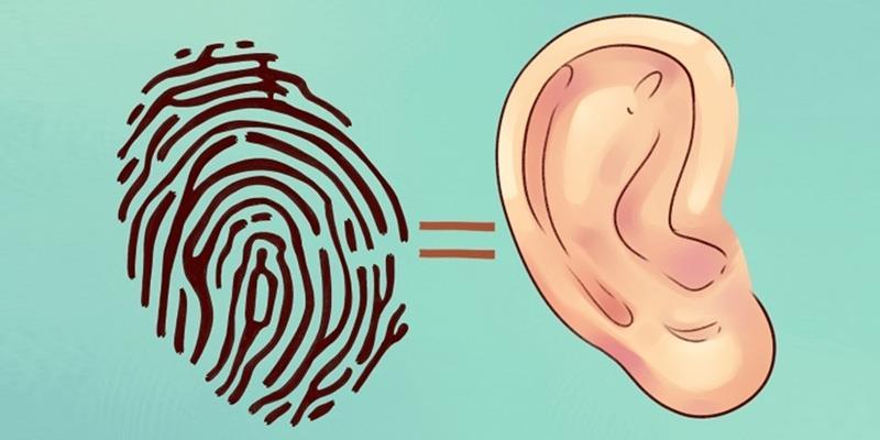 Hóa ra tai không phải chỉ dùng để nghe và đeo trang sức