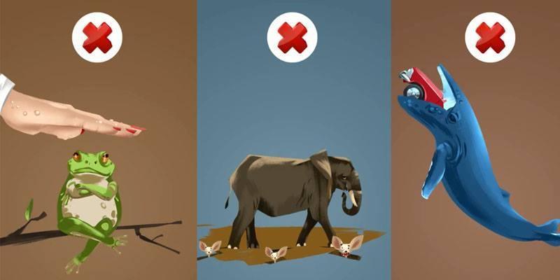 Bóc mẽ những lời đồn về các loài động vật mà con người cứ cho là mình nói đúng