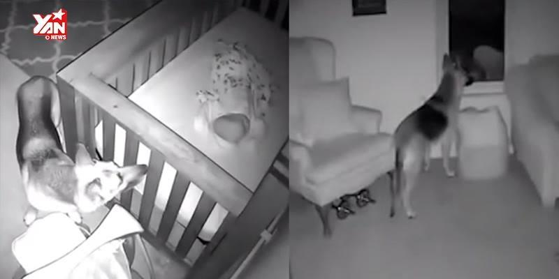 Đặt camera theo dõi, bố mẹ phát hiện hành động kì lạ của chó cưng với con trai