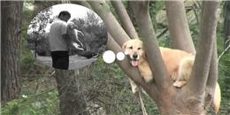 Sự thật cảm động về chú chó cứ nghĩ mình là khỉ với biệt tài leo cây siêu đỉnh