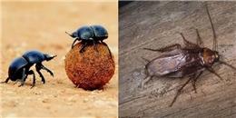 7 con vật mang 'siêu năng lực' đang lọ mọ trong nhà bạn đây này!