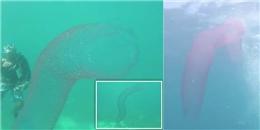 Xôn xao clip ''quái vật ngoài hành tinh'' xuất hiện dưới đáy biển sâu