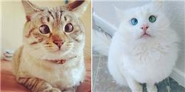 Những chú mèo ''mắt đã lác lại còn siêu ngơ ngác'', đáng yêu hết sức