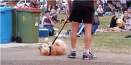 Màn 'ăn vạ' lầy lội của mấy boss ham chơi, ai nuôi chó nhất định phải xem!