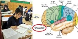 Chuyện gì xảy ra khi bộ não của chúng ta học ngôn ngữ?