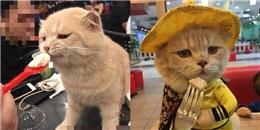 Tranh cãi xung quanh việc có nên cho chó mèo vào quán cafe