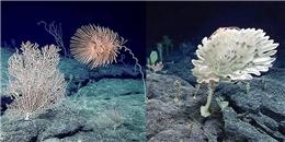 """Sững sờ với """"vườn địa đàng"""" vừa được phát hiện ở độ sâu 2.350m dưới đáy biển"""