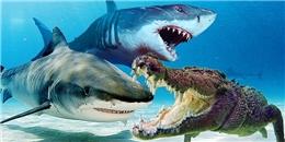Ngỡ ngàng với cảnh tượng: Cá mập bị cá sấu cắn vỡ đầu vì tranh giành thức ăn