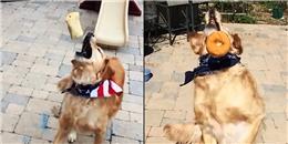 Há miệng ăn toàn trượt, đây đích thị là chú chó xui xẻo nhất thế giới rồi!