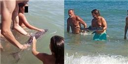 Cá heo con chết thảm sau khi bị du khách thay phiên bắt chụp hình 'sống ảo'