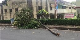 Nữ công nhân đang ăn thì bị cây rơi trúng đầu ở Sài Gòn đã tử vong