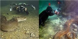 Hình ảnh 'quái vật sông Amazon' từ người thợ lặn dũng cảm không bảo hộ