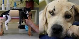 Châm cứu: Một hướng chăm sóc sức khỏe chuyên biệt cho thú cưng