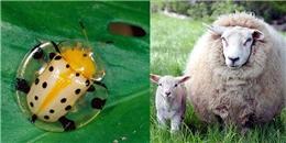 Top 10 loài động vật có khả năng 'phản đối' các chuyên gia dự báo thời tiết