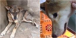 Xúc động hình ảnh chú chó mặt buồn thiu, bỏ bữa vì nhớ chủ đã qua đời