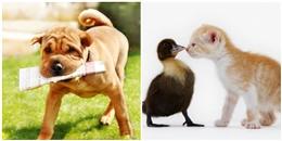 Nuôi chó mèo phải chú ý, rất có thể nhiễm bệnh từ thú cưng đó!