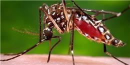 Đây là 2 thời điểm trong ngày bạn cần phải chú ý nhất khi dịch sốt xuất huyết đang báo động đỏ như hiện nay