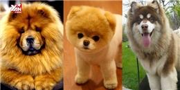10 giống chó đáng yêu vô địch vũ trụ và siêu lừa tình khiến ai thấy cũng mê