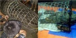 Hà Nội: Người dân lo sợ còn có nhiều con cá sấu khác trên sông Tích