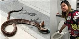 Hi hữu: Bị trăn chui lên từ bồn cầu cắn vào mông khi đang đi toilet