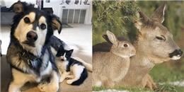 18 cặp đôi thú cưng là 'anh em cùng cha khác ông nội' giống nhau đến ngỡ ngàng