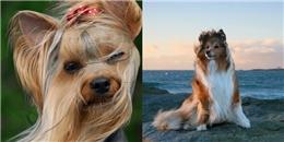 Cười vỡ bụng với những thú cưng mặt 'phê như con tê tê' khi được hít gió trời