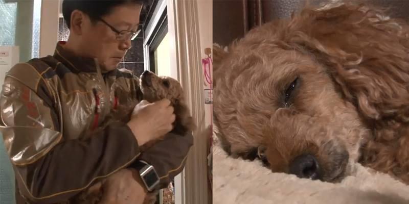 Cay sống mũi với cảnh nàng chó bị bắt cóc rơi nước mắt nhớ về chủ cũ