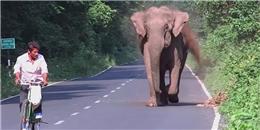 Người đàn ông bị voi hung hãn đuổi theo, nhưng biết nguyên nhân thì ai cũng đồng tình với chú voi
