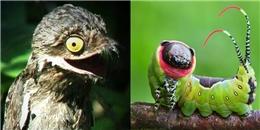 7 sinh vật có ngoại hình xấu không tưởng như là 'con ghẻ' của thiên nhiên