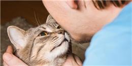 Chuyện lạ có thật: Bị mèo cào, thanh niên 23 tuổi bỗng nhiên... bất lực