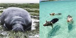 Siêu bão Irma biến bãi biển của các chú lợn tung tăng bơi lội thành ra hoang tàn thế này