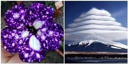 Những bức ảnh khó tin cho thấy thiên nhiên có quá nhiều điều kỳ diệu