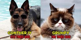 Những chú thú cưng được xếp hạng triệu phú đô la Mỹ với khối tài sản khủng nhất mọi thời đại