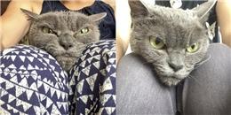 Tìm thấy cô mèo có gương mặt cau có khó chịu nhất hệ mặt trời