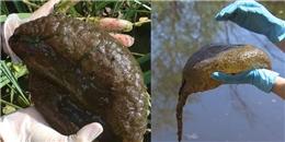 Phát hiện sinh vật 'ngoài hành tinh' nhầy nhụa như bộ não trong hồ nước ở Canada