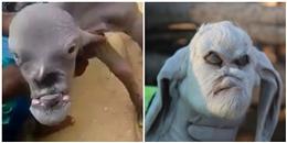 Con dê với gương mặt quái dị xuất hiện tại Ấn Độ khiến cả làng sợ hãi