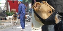 Người nuôi chó nhất định phải biết những quy định mới về rọ mõm cho chó và chiến dịch 'tiêu huỷ'