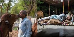 Chuyện lạ gây sốc nhưng hoàn toàn có thật: Bỏ vợ để sống chung với... bò cái
