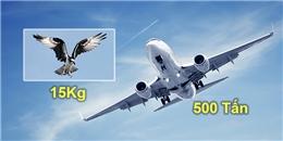 Đây là lý do máy bay không cần vỗ cánh mà vẫn bay lượn nhẹ nhàng như loài chim