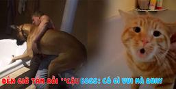Chết cười với cảnh các 'sen' vật lộn với thú cưng khi đến giờ tắm