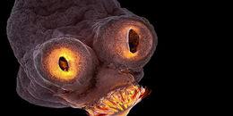 Nhìn thì cứ ngỡ 3D giả tưởng, thực ra đây là hình ảnh được soi qua kính hiển vi đẹp nhất năm 2017