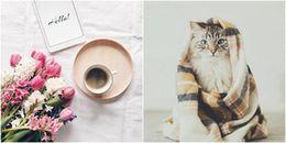 Hạnh phúc giống như cái đuôi của một chú mèo, luôn theo sát mà bạn chẳng nhận ra