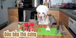 Chú chó trổ tài nấu bếp siêu 'ngầu' khiến các 'sen' phải thán phục