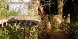 Ghé thăm công viên Disney hoang tàn như bị ma ám ở Mỹ