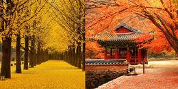 Muốn có những tấm ảnh lá vàng lá đỏ đẹp nhất thì phải đi ngay những 'thiên đường' ở Hàn Quốc này